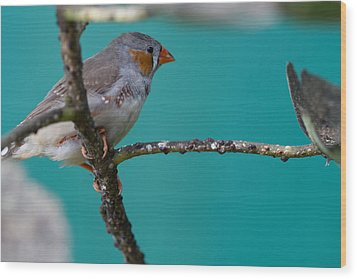 Wood Print featuring the photograph Bird On A Branch by John Hoey
