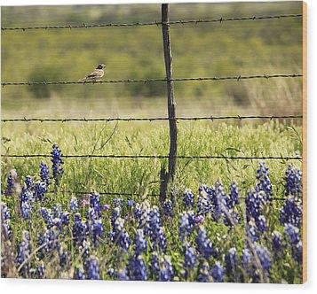 Bird On A Fence Wood Print