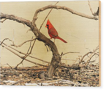 Wood Print featuring the photograph Bird On A Vine by Jayne Wilson