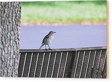 Bird On Bench Wood Print by Aimee L Maher Photography and Art Visit ALMGallerydotcom