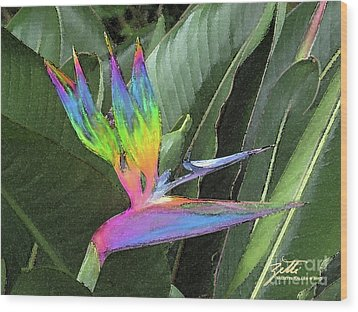 Wood Print featuring the photograph Bird Ow  Paradise by Suzette Kallen