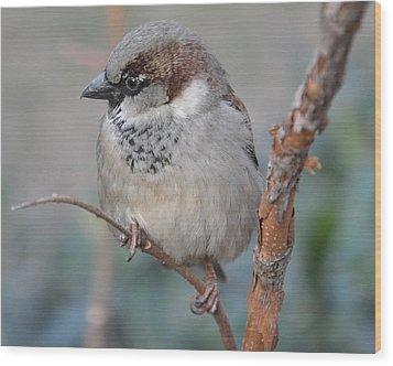 Bird Shot Wood Print