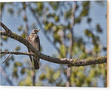 Wood Print featuring the photograph Bird Sitting On Brach by Leif Sohlman