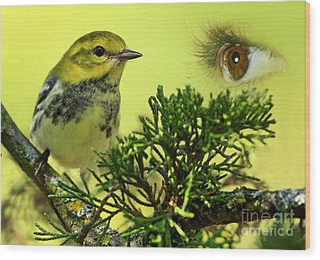 Bird Watching Wood Print by Inspired Nature Photography Fine Art Photography
