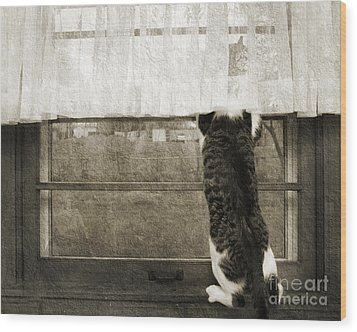 Bird Watching Kitty Cat Bw Wood Print by Andee Design
