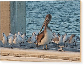 Birds - Among Friends Wood Print by HH Photography of Florida