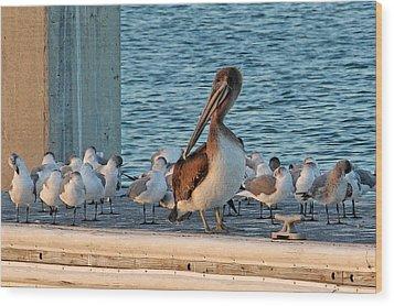 Birds - Among Friends Wood Print