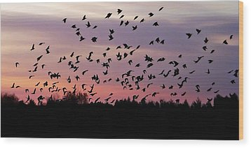Wood Print featuring the photograph Birds At Sunrise by Aimee L Maher Photography and Art Visit ALMGallerydotcom