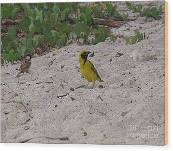 Birds - Ile De La Reunion - Reunion Island Wood Print by Francoise Leandre