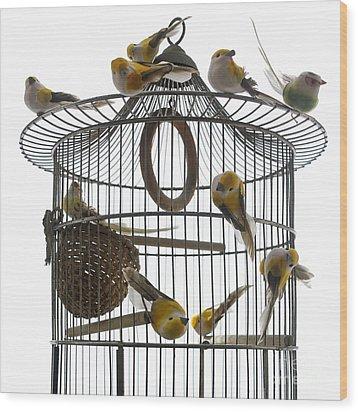Birds Inside And Outside A Cage Wood Print by Bernard Jaubert