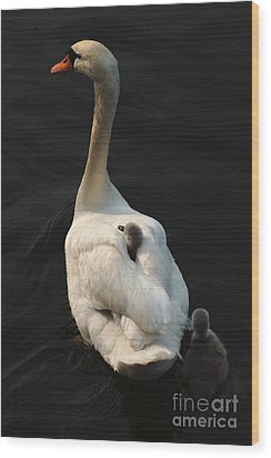 Birds Of A Feather Stick Together Wood Print by Bob Christopher