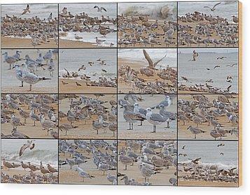 Birds Of Many Feathers Wood Print by Betsy Knapp