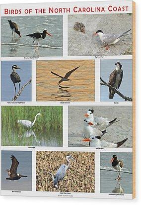 Birds Of North Carolina Coast Wood Print