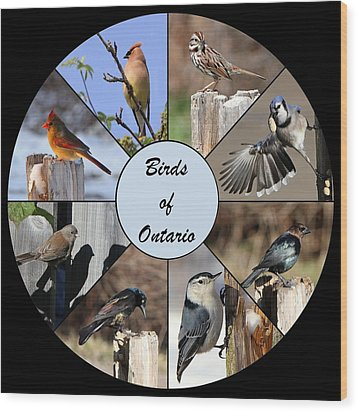 Birds Of Ontario Wood Print by Davandra Cribbie