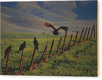Wood Print featuring the photograph Birds On A Fence by Matt Harang