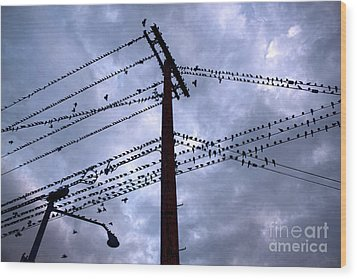 Birds On A Wire In Blue Wood Print by Gregory Dyer