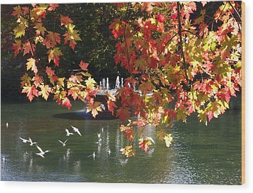 Birds Over Water Wood Print by Jocelyne Choquette