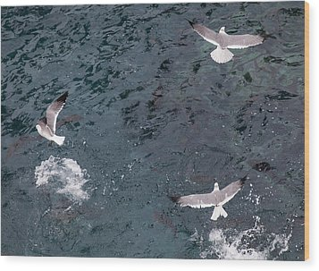Birds Taking Advantage Of Feeding Time  Wood Print by Susan Stone