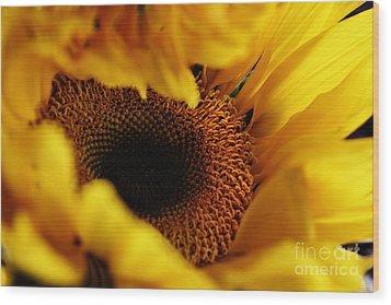 Birth Of A Sunflower Wood Print by Stephanie Frey