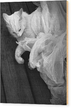 Birth Of The White Cat Wood Print by Darryl  Kravitz