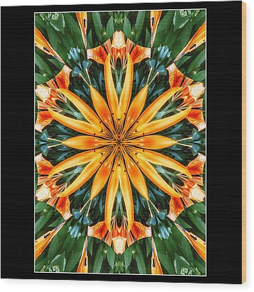 Birthday Lily For Erin Wood Print by Nick Heap