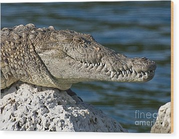 Wood Print featuring the photograph Biscayne National Park Florida American Crocodile by Paul Fearn