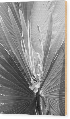 Wood Print featuring the photograph Bismark Palm by Jim Snyder
