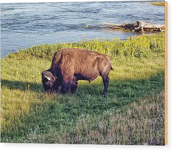 Wood Print featuring the photograph Bison 4 by Dawn Eshelman