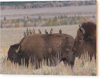 Bison And Buddies Wood Print