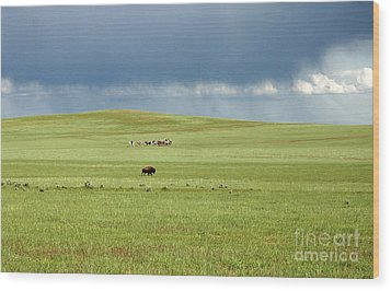 1009a Bison And Riders Wood Print by NightVisions