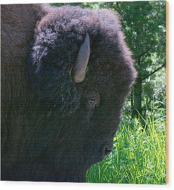 Bison Close Up Wood Print