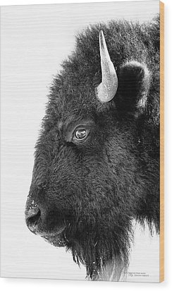 Bison Formal Portrait Wood Print by Dustin Abbott