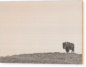 Bison Hill  Wood Print by James BO  Insogna