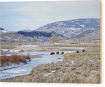 Bison In Lamar Valley Wood Print