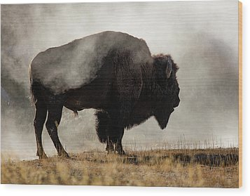Bison In Mist, Upper Geyser Basin Wood Print