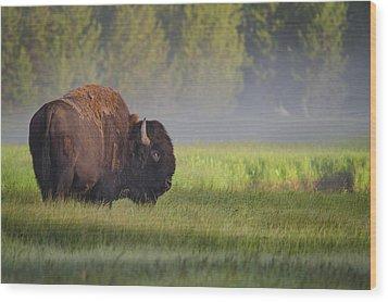 Bison In Morning Light Wood Print