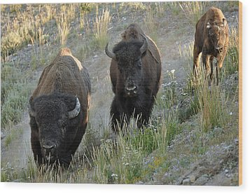 Bison On The Run Wood Print by Bruce Gourley