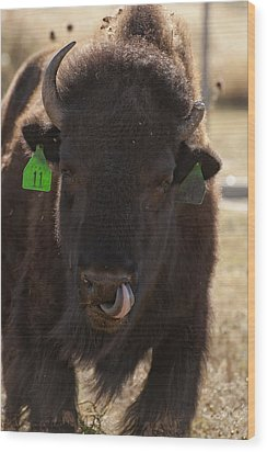 Bison One Horn Tongue In Nose Wood Print by Melany Sarafis