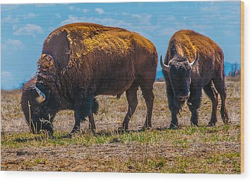 Bison Pair_1 Wood Print by Tom Potter