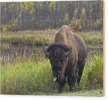 Wood Print featuring the photograph Bison by Rhonda McDougall
