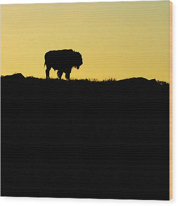 Wood Print featuring the photograph Bison Sunrise by Sonya Lang