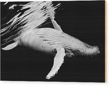 Black & Whale Wood Print by Barathieu Gabriel