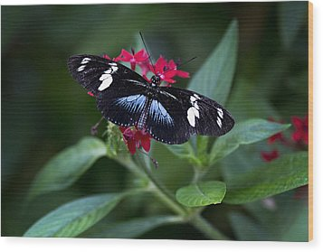 Black And Blue Butterfly Wood Print