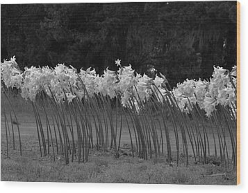 Black And White Amaryllis Wood Print by Denice Breaux