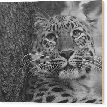 Black And White Amur Leopard Wood Print