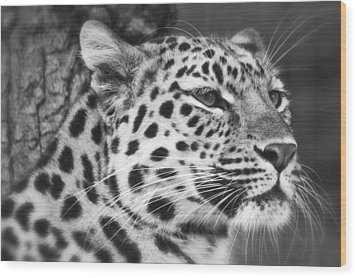 Black And White - Amur Leopard Portrait Wood Print