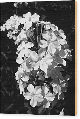 Wood Print featuring the photograph Black And White Beauty by Alohi Fujimoto