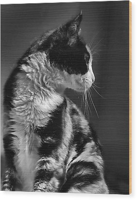 Black And White Cat In Profile  Wood Print by Jennie Marie Schell