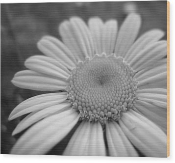 Black And White Daisy Wood Print