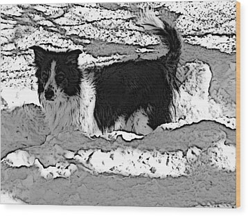 Black And White In Snow Wood Print by Michael Porchik